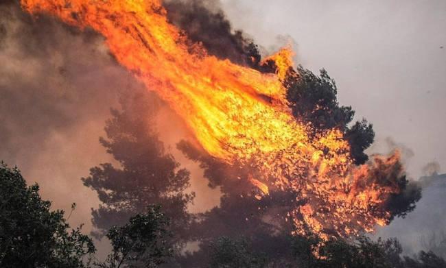 Πυρκαγιά τώρα στα Καλύβια Αττικής 5 οχήματα δίνουν την μάχη